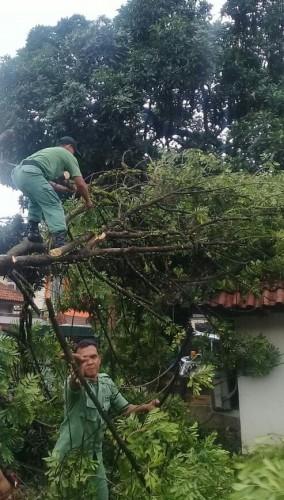 Akibat Angin Kencang, Sejumlah Pohon Tumbang Terjadi di Beberapa Ruas Jalan di Banyumas